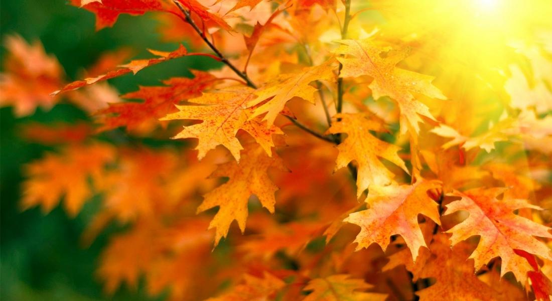 Осенний ценопад -10%